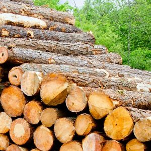 logging-industry-new-1